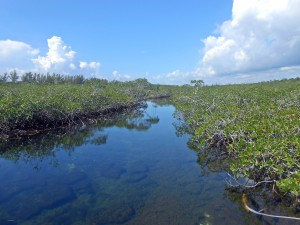 Gold Rock Creek, Grand Bahama Island